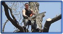 Кронирование деревьев, обрезка веток